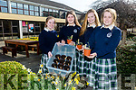 Presentation Tralee TY group have reached the last 50 teams in the SEAI 'One Good Idea' competition with their project 'Locally Grown Is Better Known'. Pictured  l-r Eimear Allard, Blaithnaid Cotter, Ciara Boyd and Rebecca Duggan