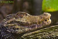 0519-07mm  Cuvier's Dwarf caiman - Paleosuchus palpebrosus - © David Kuhn/Dwight Kuhn