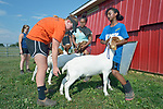 Eldana Teclamariam, a 12-year old resettled refugee from Eritrea, braces her goat on a farm in Linville, Virginia, on July 17, 2017, as Holly Mumaw inspects her animal's posture. Mumaw volunteers to help Teclamariam and other refugee youth, resettled in the area by Church World Service, prepare to show sheep and goats in a county fair.<br /> <br /> Photo by Paul Jeffrey for Church World Service.
