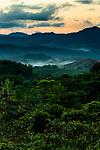 Semi-deciduous tropical moist rainforest at sunrise, Mamoni Valley, Panama