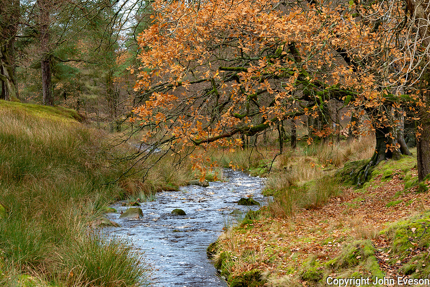 Marshaw Wyre in the autumn, Marshaw, Lancaster, Lancashire.