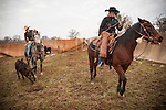Calf marking at the Joses Ranch,Telegraph City, Calaveras County, Calif..
