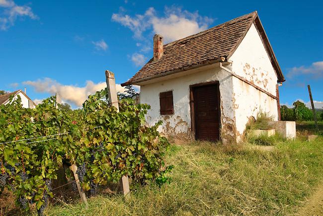 Villany vineyards  ( Villany  ) Hungary.