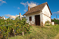 Villany vineyards  ( Villany  ) Hungary.