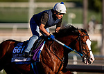 OCT 26: Breeders' Cup Mile entrant Snapper Sinclair, trained by Steven M. Asmussen, gallops at Santa Anita Park in Arcadia, California on Oct 26, 2019. Evers/Eclipse Sportswire/Breeders' Cup