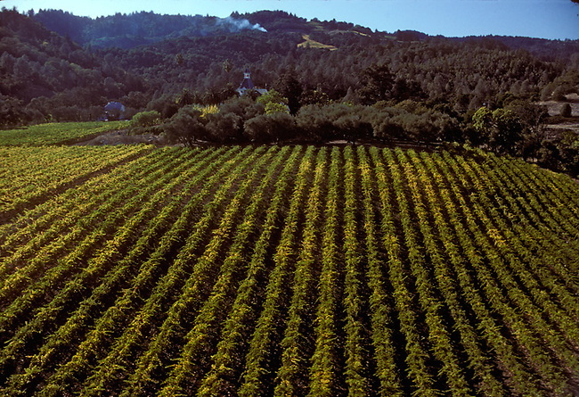 Vineyards of Spring Mountain Winery in St. Helena, Ca.