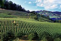 Schweiz, Weinberge in Spiez am Thuner See im Berner Oberland