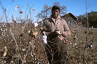 December 1976. Plains, Georgia. A woman picks cotton, in her small field, just outside Plains.
