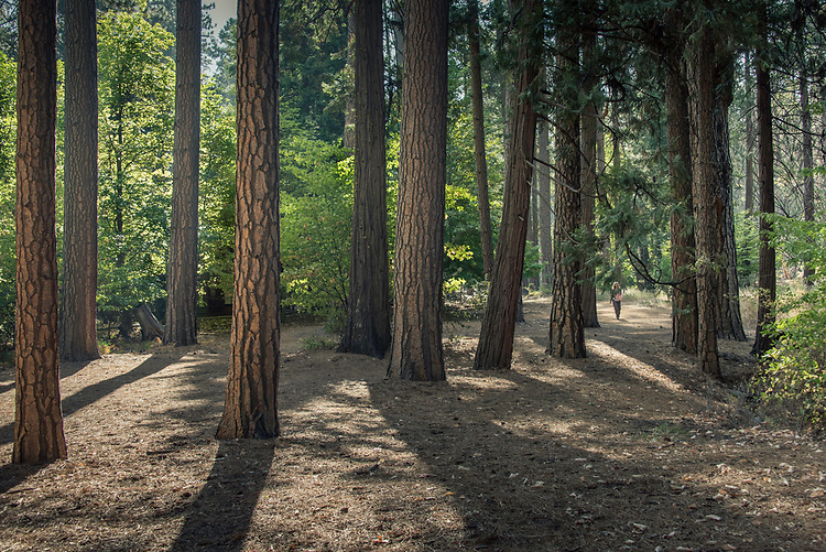 September 2014 / Yosemite National Park landscapes / Woodlands near Cathedral Beach / Photo by Bob Laramie