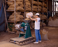 Kona Coffee plantation worker processing beans with sheller huller machine, Big Island, Hawaii, USA.