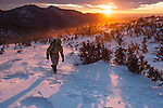 Hiker (MR) dressed for cold and wind in krummholz at sunrise, near treeline in winter, Rocky Mountain National Park; blowing snow, February 2008, Colorado, USA, Rocky Mountains (MR)