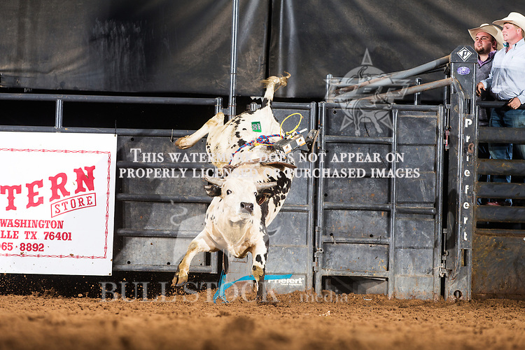 C08 Amy's Boy from 444 Bucking Bulls / BS Cattle Co bucks during the futurity at the 8th annual ABBI Spring Fling in Stephenville, Texas.