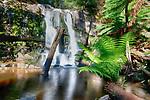 Lilydale Falls, Tasmania