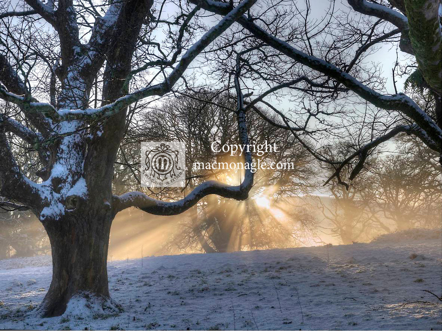 Early morning light illuminates the shade at Muckross Abbey, Killarney on Monday following the heaviest overnight snowfall in many years..Picture by Don MacMonagle