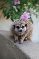 Nature  Cuties