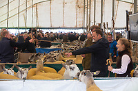 Buyers looking at Blueface Leicester Rams at Kelso Ram Sales<br /> &copy;Tim Scrivener Photographer 07850 303986<br />      ....Covering Agriculture In The UK....