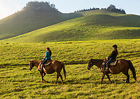 Visitors enjoy horseback riding over the mystical hills of Kohala, Hawai'i Island. This part of Kohala is in Waimea, near sunset.