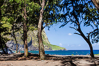 Campers sitting under trees along the beach in Waipi'o Valley, Big Island.