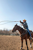 USA, California, Mammoth, USA, California, Mammoth, cowboy with lasso in hand, prepares to wrangle cattle