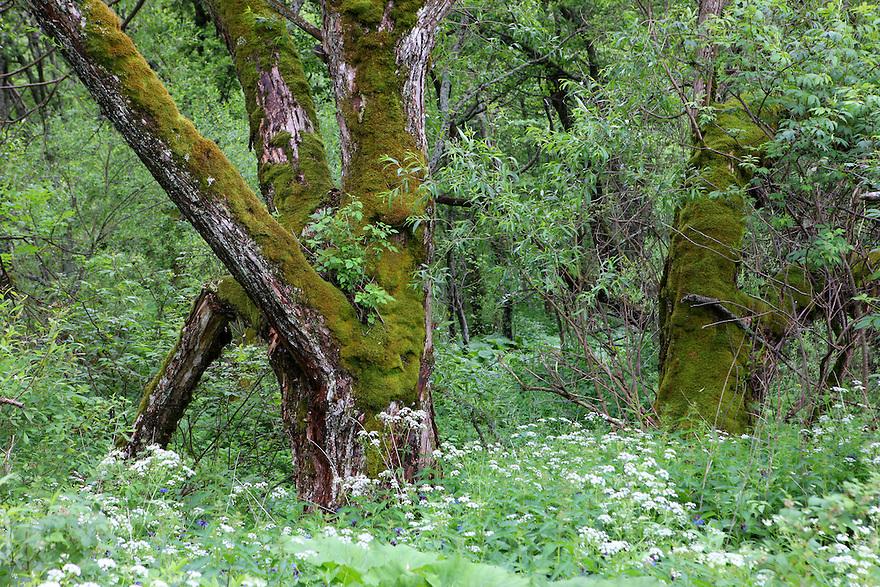 Riparian forest, Bieszczady National Park, Poland