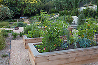 Raised bed vegetable garden with tomatoes and broccoli; Broder Garden