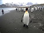 Ioffe,,Sailing to South G.OOE.Expedition,Antarctic Peninsula