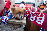 Kansas City, MO - Monday, June 16, 2014:  Tex, and owner Ruben Stafford, watch the USA vs. Ghana first round World Cup match at a public viewing in the Power and Light District of Kansas City, Missouri.
