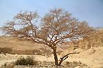 Israel, Dead Sea valley, the road to Nahal Azgad and Nahal Ashalim