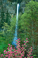 73860060 a flowering tree frames multnomah falls in the columbia river gorge national scenic area in northern oregon