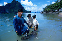 Farmer with his family catching mollusc for feeding shrimps in aquaculture