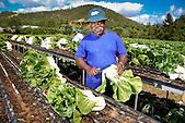 """Ouvrier agricole du """"Jardin calédonien"""" à Dumbéa"""