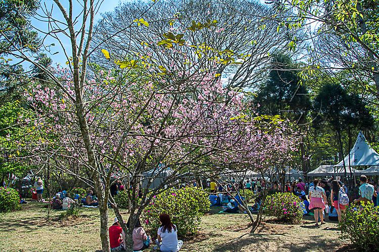 Hanami - ato de sentar sob as cerejeiras e contemplá-las durante a Festa das Cerejeiras realizada todo ano pela comunidade japonesa do bairro Bosque das Cerejeiras do Parque do Carmo - bairro Itaquera, São Paulo - SP, 08/2016.