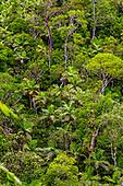 Forêt de l'Aaoupinié