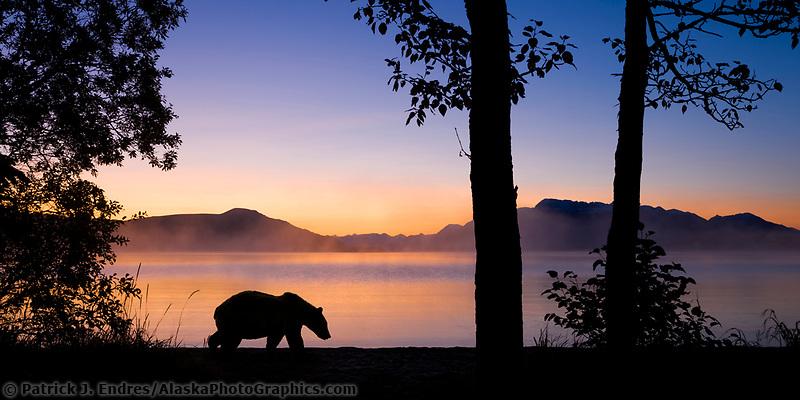 Brown bear walks along the shores of Naknek lake at dawn, Kejulik mountains, Katmai National Park, Alaska.
