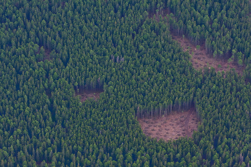 Aerial view of small clear cuts in managed spruce forest. High Tatras, Slovakia. June 2009. Mission: Ticha
