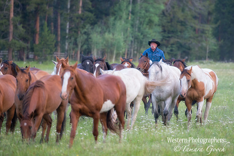 A photo of a cowboy herding horses. Cowboy Photos, riding,roping,horseback