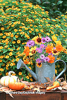 63821-112.03  Autumn Bouquet - Asters, Cosmos, Gaillardia, Goldenrod in watering can. Mini gourds, pumpkins & Melampodium, Marion Co.  IL