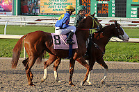 January 17, 2015: Slava (KY) with Alexander Reznikov in the Silverbulletday Stakes at the New Orleans Fairgrounds course. Steve Dalmado/ESW/CSM