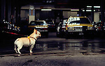 Taxi garages are dotted around neighbourhoods all across the city and many take care of all the maintainence for the cabs as well as organising drivers and routes. The owner's dog keeps watch over all at this Nihon Kotsu garage in Tokyo's Shinagawa Ward.