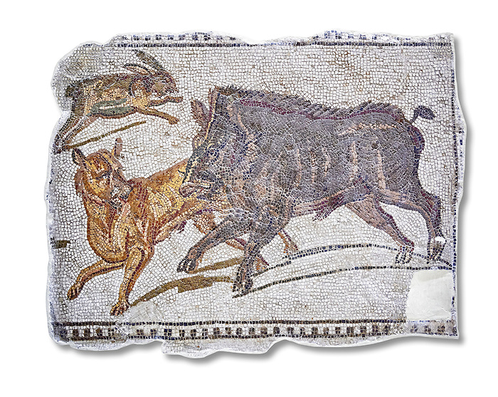 First half of the 3rd century AD Roman mosaic depiction  a wild boar and hare hunt. From Hadrumetum (Sousse), Tunisia.  The Bardo Museum, Tunis, Tunisia. White Background.