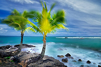 Palm trees in wind. Keaukaha Park. Hawaii, the big island. The island of Hawaii.