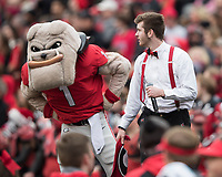 Athens, Georgia - November 24, 2018: Sanford Stadium, the number 5 ranked University of Georgia Bulldogs play the Georgia Tech Yellow Jackets.  Final score UGA 45, Georgia Tech 21.