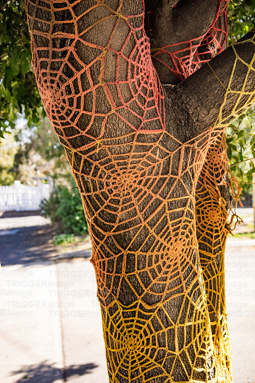 Crochet trees covered in cobweb knitting in Melbourne