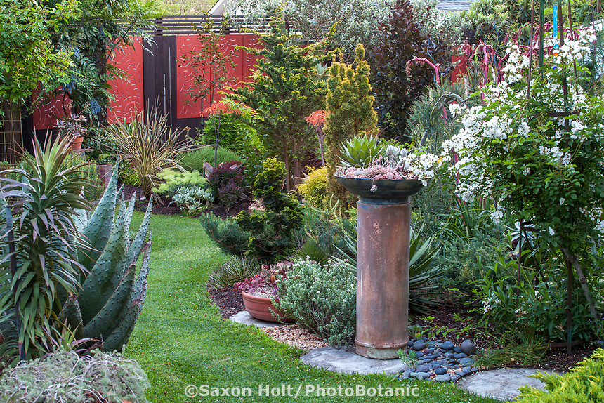 California plant collector garden wiht red fence and focal point of succulent dish on pedestl; - Carol Brant