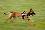 Police K-9 dog running blurred with speed