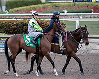 HALLANDALE BEACH, FL - JAN 06: Thewayiam #5 with Jose L. Ortiz in the irons parades before the onlookers prior to winning The $100,000 Ginger Brew Stakes for trainer H. Graham Motion at Gulfstream Park on January 6, 2018 in Hallandale Beach, Florida. (Photo by Bob Aaron/Eclipse Sportswire/Getty Images)