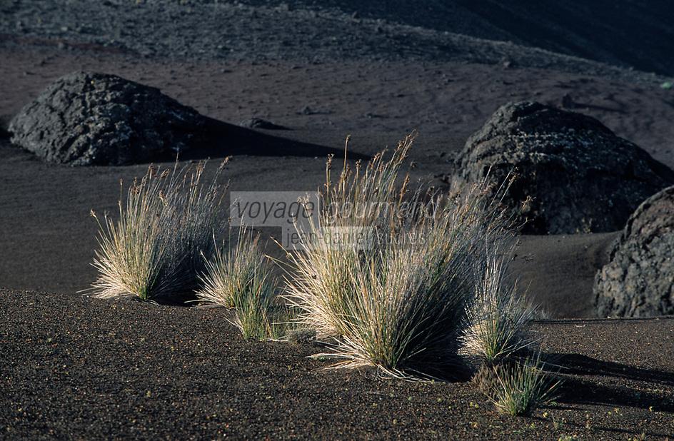 Europe/Espagne/Iles Canaries/Lanzarote : Paysage volcanique du Parc National du Timanfaya