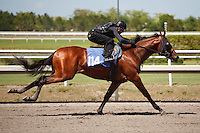 #114Fasig-Tipton Florida Sale,Under Tack Show. Palm Meadows Florida 03-23-2012 Arron Haggart/Eclipse Sportswire.