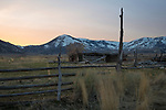 Idaho, South central, Almo. An old log structure just out side the community of Almo at sunset in spring.