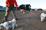 USA, California, San Francisco, NOPA, Alamo Park dog walker